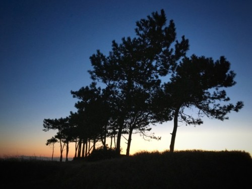 夕焼けの松林