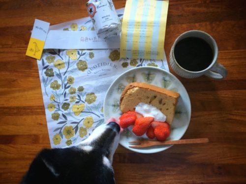 フードムードさんのレモンシフォンケーキ