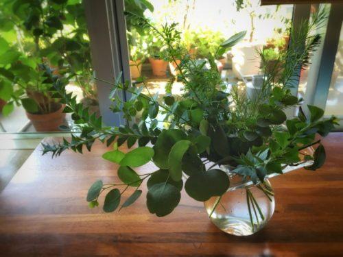 オーストラリア原産の植物は暑さに強い