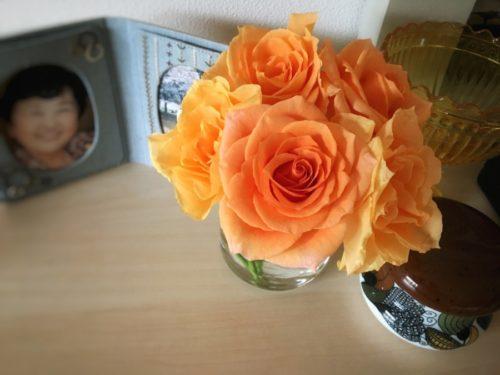 とてもステキなカホリのバラ
