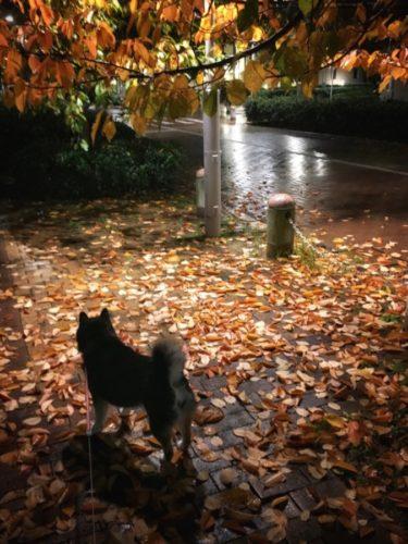 夕方から雨。スーパームーンは見えそうもない
