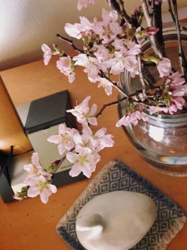エドヒガンザクラ キレイに咲いてます