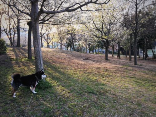 今日は朝早く散歩に出ました