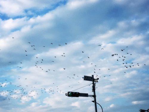 海で見た渡り鳥の雁