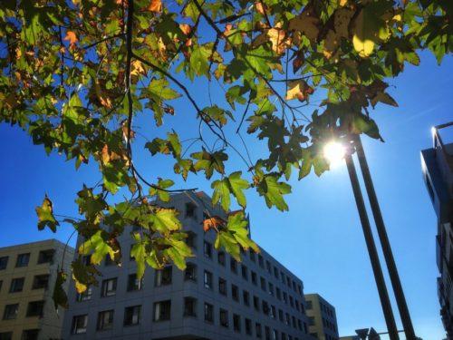 秋晴れのいい日です