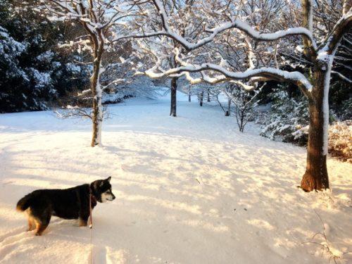 今朝のお散歩は雪景色