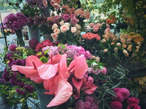 よく知ってるお花も見たことのない色やカタチが魅力的
