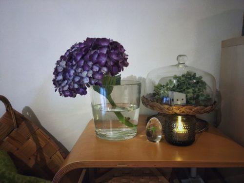 花屋さんで買ってきたアジサイ