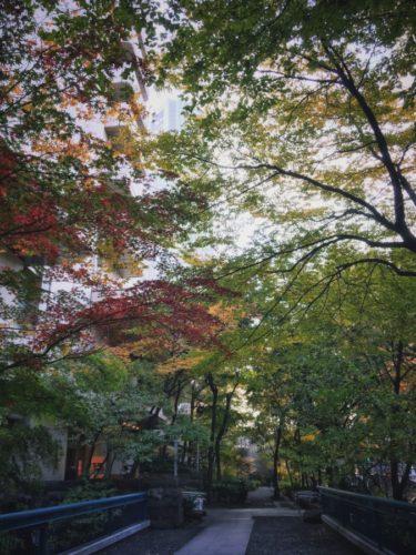都会の真ん中で秋を感じる