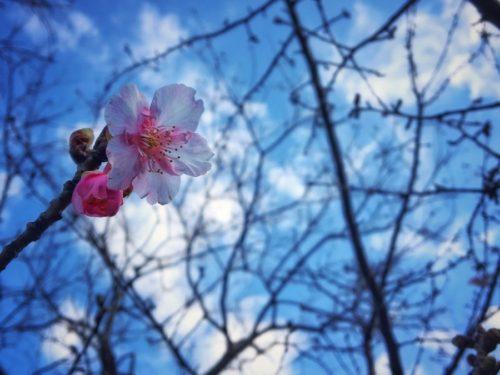 今日は立春、ホントに春のような陽気