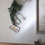 ミモザの枝