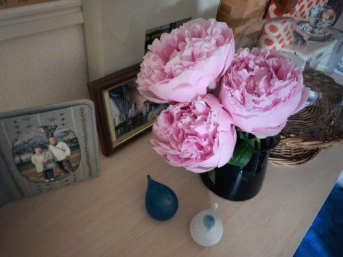 シャクヤクの花をお供えしました。