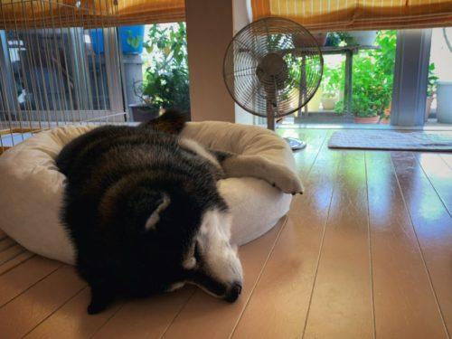 今年は扇風機より先にエアコンをつけた