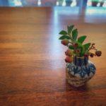 ブルーベリーの小枝