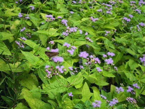 お庭にはカワイイお花に蝶々が来る