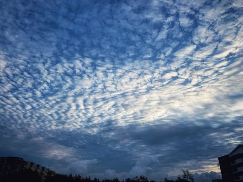 今朝の空 ウロコ雲