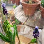 水栽培の花