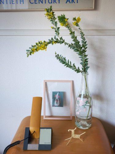 三角葉アカシアの花、いいカホリなんです